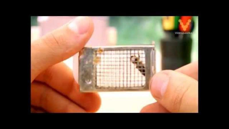 Мечение маток метка пчелиной матки