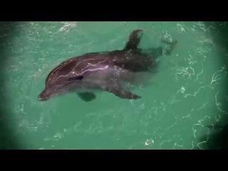 Все как у зверей (Евгения Тимонова) - Дельфиний секс