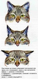 кошачье звуки