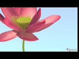 Lotus Flower Modeling. Part II - Petals & Stamens