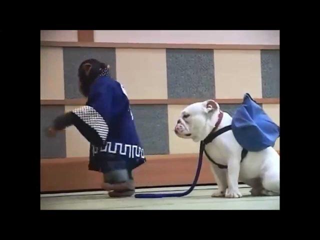 [1080p] Super Monkey Lovely Dog Season 02, Ep 11