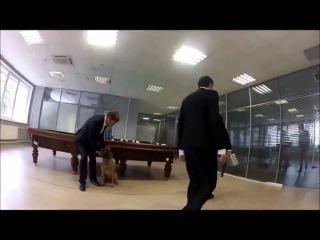 Biting Elbows - 'Bad Motherfucker' (Insane Office Escape Episode 1-2)