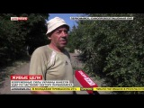 ВСУ обстреляли Первомайск из танков — 83-летнюю пенсионерку разорвало на части