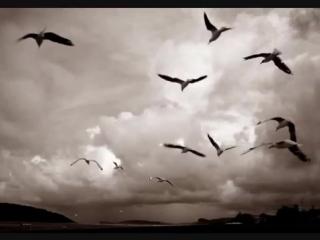 Песня о птицах - Александр Градский