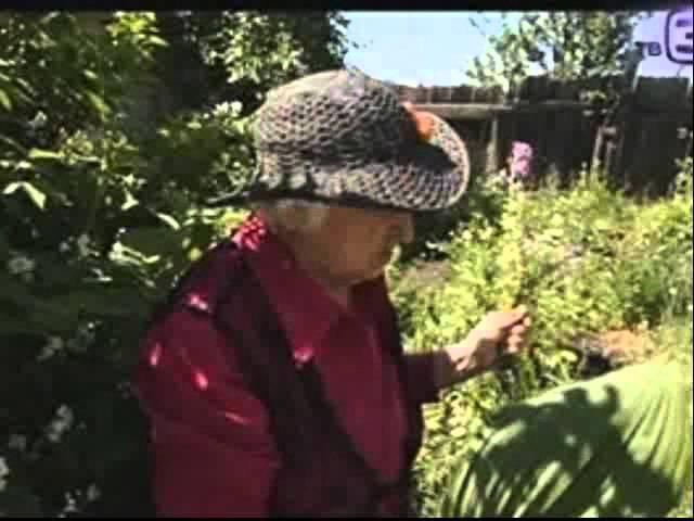 Травы для лечения алкоголизма и для печени
