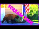 SCREAM TIME S.T. VINE - Собака мужика обоссака