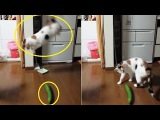 Cucum-BAHHH!! Cat scared of cucumbers gets shock of his life