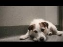 Предательство людей и преданность собак TTl (Трогательно )