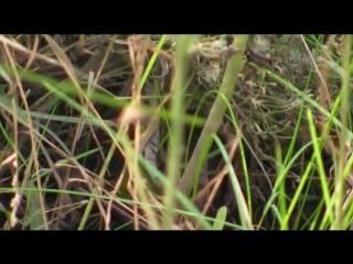 Охотница на змей 6 серия