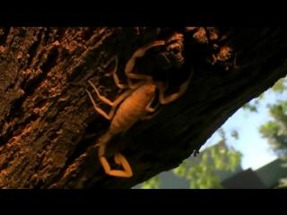 Animal Planet: Самые большие и страшные жуки в мире (2009)