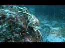Баренцево море Дальние зеленцы