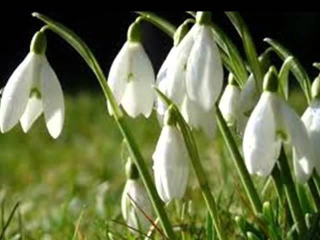 Когда весна опять придет- редкое русское танго Оскара Строка- Яна Грей-Yana Gray
