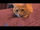 Игры для кошек на Android-планшете: тест с Фокси (cat games for Android)