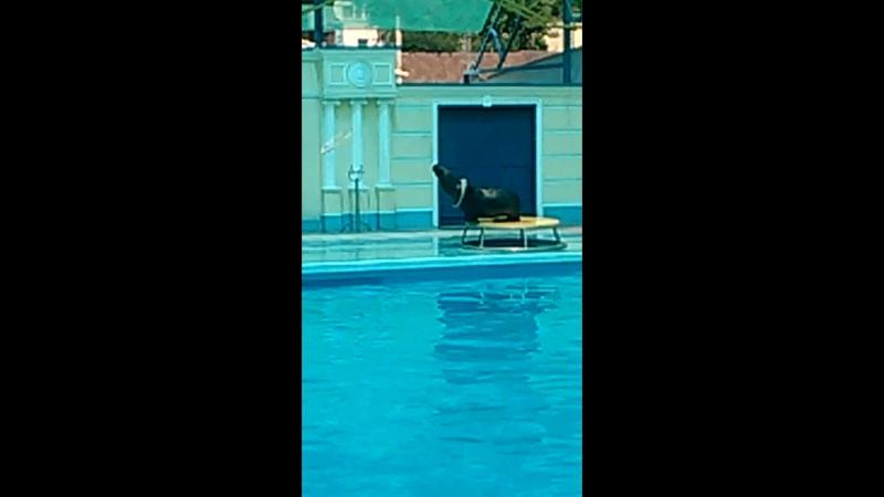 Дельфинарий в п. Небуг на сцене морская львица Алиса, бесподобное зрелище