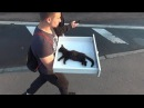 Спасение котенка от смерти.