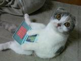 Приколы с котами Смешные коты кошки Подборка приколов с животными Прикольные Забавные Весёлые