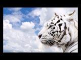 Schodt feat. Aida Fenhel - White Tiger (Mango Remix)