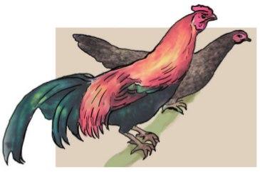 учебники про птицеводство