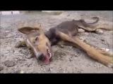 Есть свет в конце тоннеля. Emotional Animal Rescue Compilation - Animal Rescues Before and After