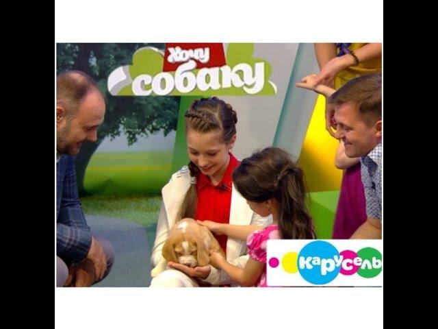 Хочу собаку на канале Карусель. Бигль. Эфир от 15.08.2015