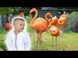 VLOG Зоопарк в Америке – Животные и Аттракционы С Максимом Влог Для Детей Часть 3