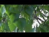 Листья на ветру...Эрнесто Кортазар. Ernesto Cortazar - Leaves in the wind.