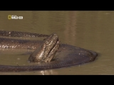 Anaconda: Silent Killer 720p