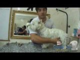 Groom Tv Br - Correção da Tosa Higiênica (West White ) - Johnatan Skolimoski - HD #46