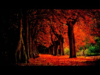 Nargaroth - Herbst (Sub - Español/English)