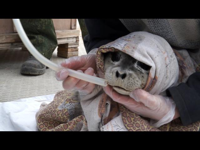 Тюлени Лоры Белоиван (YouTybe HD720)
