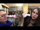 Каракет Caracat Всемирная выставка кошек 10 11 октября 2015 Санкт Петербург Дуфта Dufta