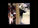 Easter Bunny caught on video brawling with Newport Centre shoppers