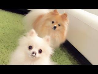 Puppy Vlog: Puppy drink Milk Foam & Beach House
