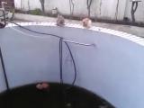 Кот дурак сбросил другого в бассейн и сам упал
