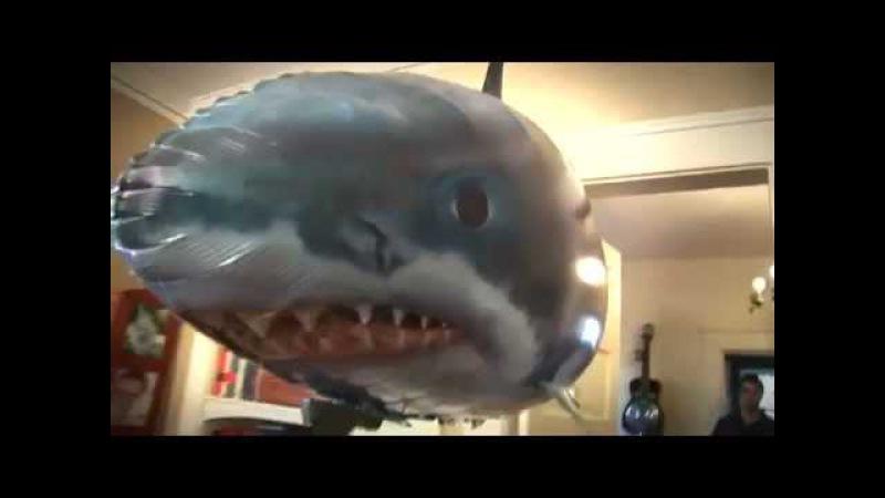 Надувная акула и рыба-клоун на радиоуправлении