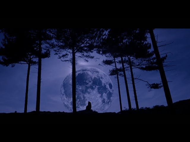 Stadiumx Taylr Renee - Howl At The Moon (Official Music Video)
