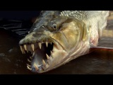 The Goliath Tigerfish is the most terrifying thing I have ever seen. Fuck that!