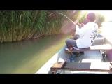 Ловля сома с лодки 2013