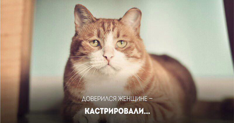 http://cs628727.vk.me/v628727831/56b3e/tvexRpmhDHE.jpg