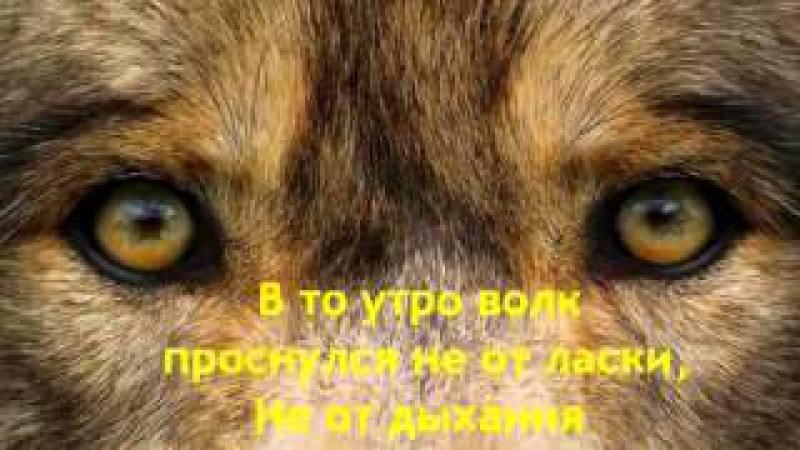 про любовь Волка и Волчицы