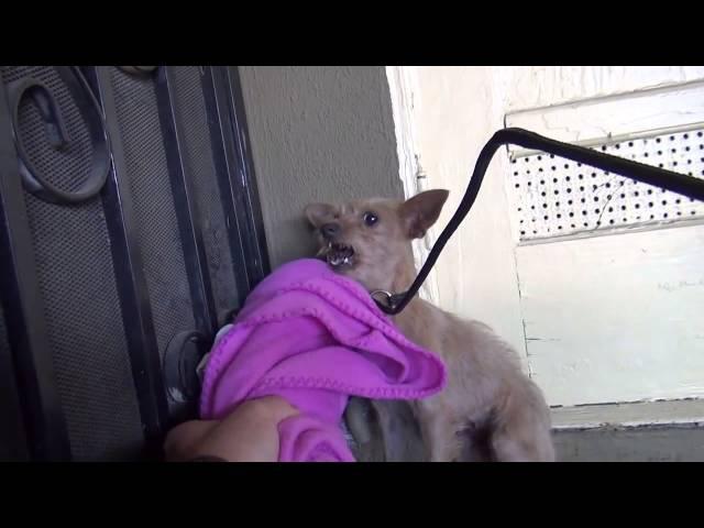 Спасение заброшенной собаки - Преобразование удивит вас!