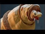 На Венере обнаружены гигантские насекомые.Обманутые наукой