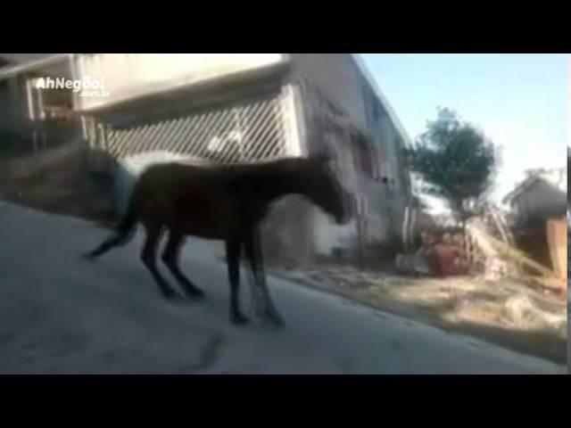 Edvaldo, o cavalo sem freio