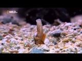 Самые странные в мире животные   В океане