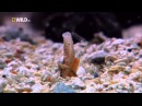 Самые странные в мире животные - В океане