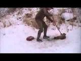 Спасение дикого животного рысь, от гибели