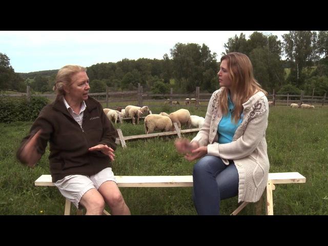 Как правильно содержать коз и овец. Живой дом 156