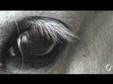 БГ+Аквариум - Северный цвет (клип 2014) HD