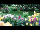 Композиции в нашем саду и красивая музыка Нини Россо (HD)
