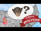 Why Are There Still Monkeys - 12 Days of Evolution #10